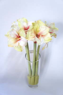 db_Flower_Illusions_pink_amaryllis