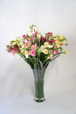 db_Flower_Illusions_pink_freeshias