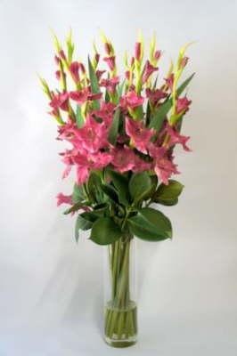 db_Flower_Illusions_plum_gladys