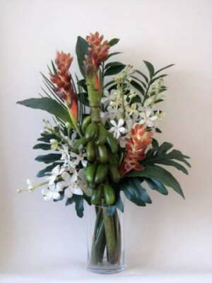 db_orchids_and_ginger