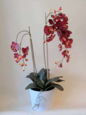 db_red_orchid_plant