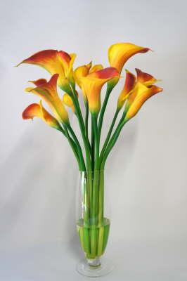 Flower_Illusions_September_2012_0301