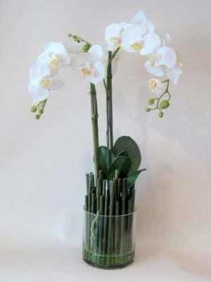 db_white_phaelenopsis_orchids
