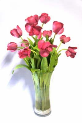 plum_tulups_Flower_Illusions